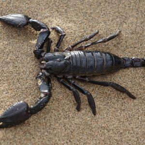 Personalidad de Escorpio  – Características de Escorpio